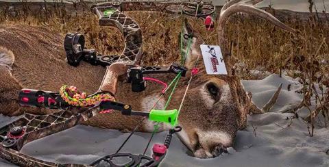 banner-img2 deer